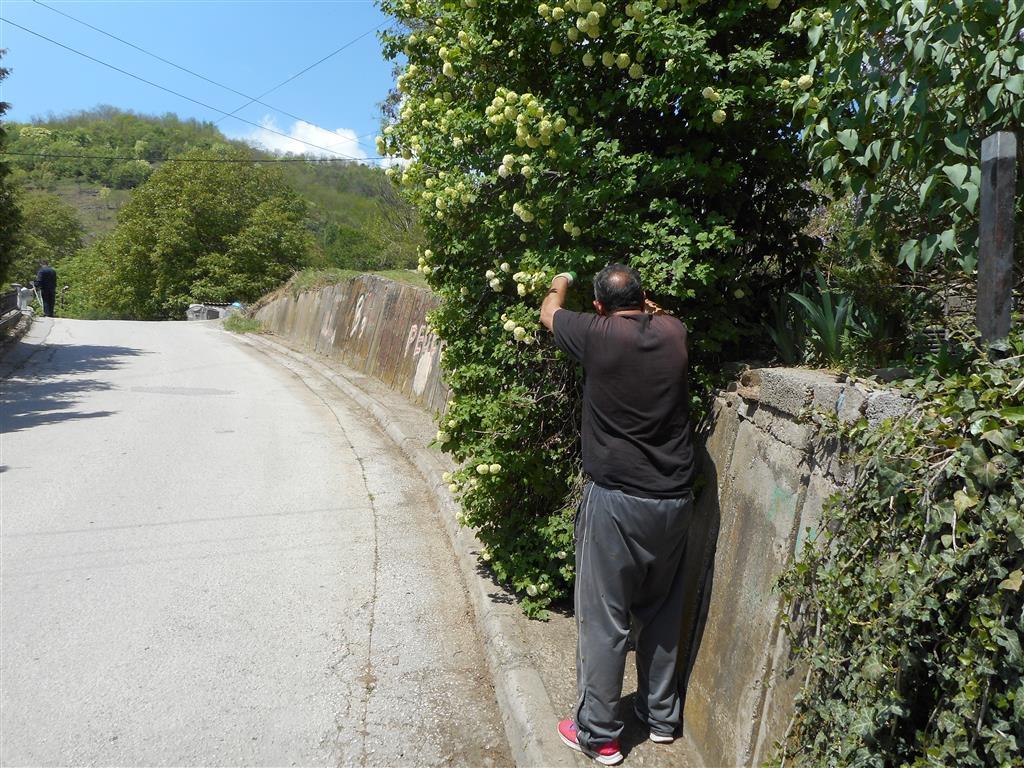 Задолжително кастрење на дрвја, грмушки и жива ограда